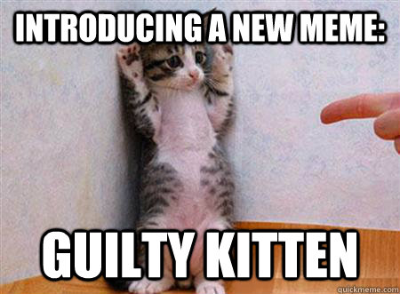 guilty kitten