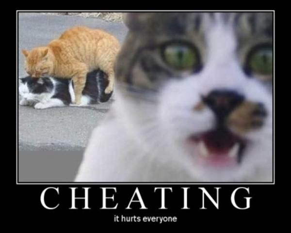cheating cats