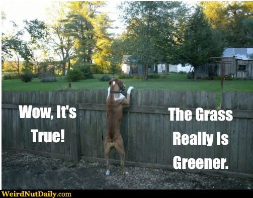 Grass is greener syndrome ex come back